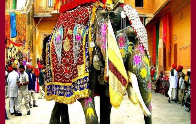 decorated elephant for baraat